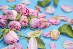 Вянуть розы как символ прошлой влюбленности Стоковая Фотография