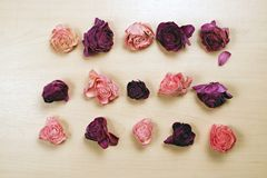Вянуть розы на пастельной деревянной предпосылке, взгляд сверху Стоковые Изображения RF