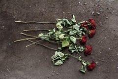 Вянуть розы Стоковые Фотографии RF