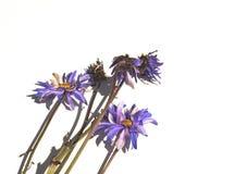 Вянуть цветки на карточке Стоковая Фотография RF