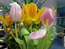 Вянуть цветки: розовые и желтые тюльпаны Стоковые Фото