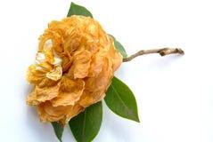 Вянуть цветок стоковая фотография