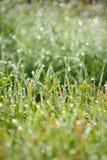 Влажная трава Bokeh с падениями Стоковая Фотография