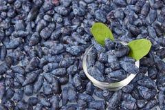 Влажная предпосылка плодоовощей ягоды каприфолия Стоковые Изображения RF