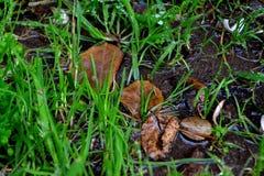 Влажная природа Стоковые Фотографии RF