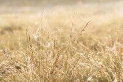 Влажная сеть паука между соломами завода Стоковая Фотография RF