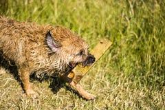 Влажная собака стоковые изображения