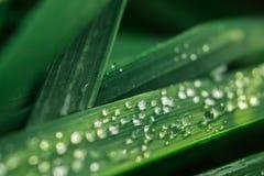 Влажная трава Стоковая Фотография