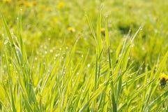 Влажная трава Стоковые Изображения