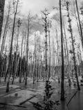 Влажное болото леса Стоковое фото RF