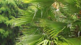 Влажное дерево в дожде видеоматериал