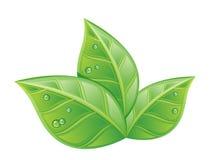 Влажное листво иллюстрация штока