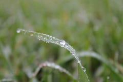 влажность Стоковые Фото