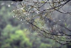 Влажные ветви дерева в лесе с падениями воды и запачканной предпосылкой Стоковая Фотография