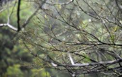 Влажные ветви дерева в лесе с падениями воды и запачканной предпосылкой Стоковые Изображения RF