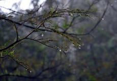 Влажные ветви дерева в лесе с падениями воды и запачканной предпосылкой Стоковое фото RF