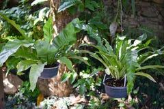 Влажные зеленые мох и папоротник Стоковые Фото