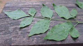 Влажные листья зеленого цвета в деревянном поле Стоковые Изображения RF