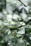 Влажные лист после дождя Стоковые Изображения RF