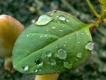 Влажные лист Стоковые Фотографии RF