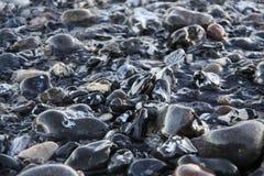 Влажные камни Стоковое Изображение RF