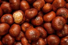 Влажные плоды конского каштана Стоковая Фотография RF