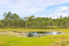 Влажный ландшафт болота на летнем дне Стоковые Изображения