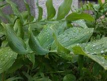 Влажный зеленый цветок в Литве на весне Стоковое Изображение