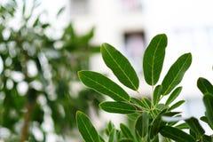 Влажный зеленый цвет выходит с запачканной строя предпосылкой, этим изображением Стоковые Фото