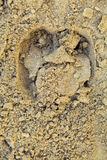 Влажный песок пляжа с печатью копыта быка Стоковое Изображение RF