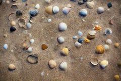 Влажный песок пляжа с предпосылкой seashells Стоковое Изображение