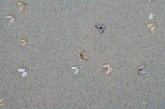 Влажный песок пляжа с seashells Стоковые Фото