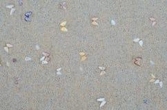 Влажный песок пляжа с seashells Стоковое Фото