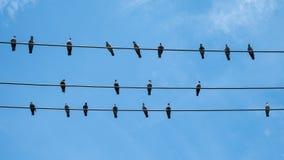 Владение птицы голубей на электрическом проводе Стоковое фото RF