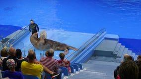 Владивосток, Россия - 28-ое июля 2017: Люди наблюдают представление в Dolphinarium Представление моржа на этапе акции видеоматериалы