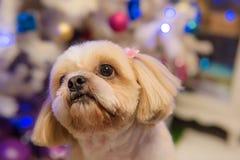 В глазах собаки которой любознательный, и ей сидела смотреть Стоковая Фотография