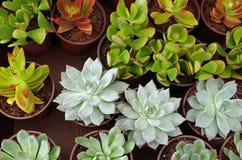 В горшке картина succulents кактуса и нефрита Стоковое фото RF