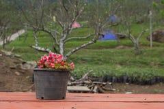 В горшке стойка цветка на windowsill Стоковое Изображение RF