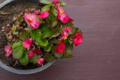В горшке стойка цветка на windowsill Стоковые Изображения