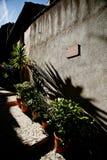 В горшке цветки на улице Стоковые Фото