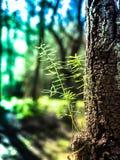 В глубоких джунглях и лесном дереве Стоковое фото RF