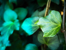 В глубоких джунглях и лесном дереве Стоковые Фото