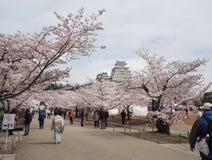 В день цветеня вишневых цветов полностью на замке Himeji-Джо Стоковые Изображения