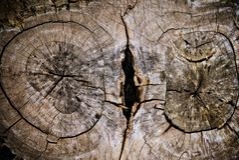 В дерево Стоковая Фотография