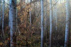 В древесинах стоковое изображение