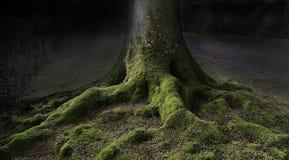 В древесины Стоковое Изображение RF
