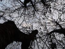 В древесины стоковое изображение