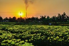 В деревне цветка, Sadec, Вьетнам Стоковые Изображения