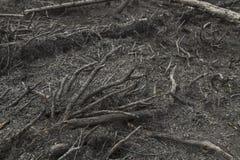 В лесе после огня стоковые изображения rf