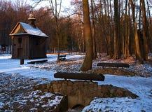 В лесе Lagiewnicki Стоковые Изображения